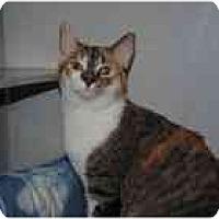 Adopt A Pet :: Nyla - Marietta, GA