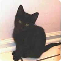 Adopt A Pet :: Quynn - Colmar, PA
