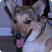Adopt A Pet :: Tracer - Murfreesboro, TN