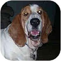 Adopt A Pet :: Chubby Dude - Phoenix, AZ