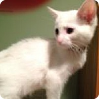 Adopt A Pet :: Sugar - East Hanover, NJ