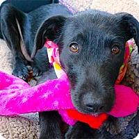 Adopt A Pet :: Annabell snuggler - Sacramento, CA