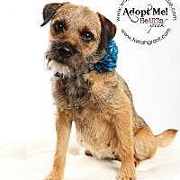 Adopt A Pet :: Tinkerbelle - Omaha, NE