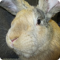Adopt A Pet :: Cornelius - Newport, DE