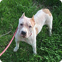 Adopt A Pet :: Avaleigh Hope - Russellville, KY