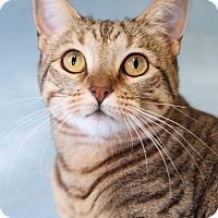Adopt A Pet :: Leia - Encinitas, CA