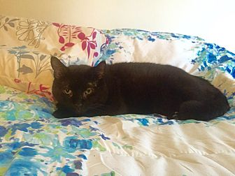 Domestic Shorthair Cat for adoption in Harrison, New York - Lucky