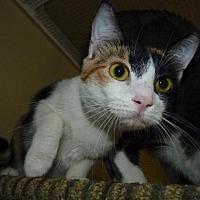 Adopt A Pet :: KESSIE - Capshaw, AL