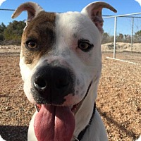 Adopt A Pet :: Dooley - Tombstone, AZ