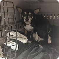 Adopt A Pet :: Tessa - Indianapolis, IN