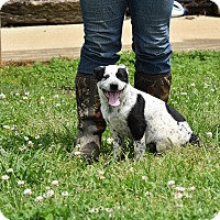 Adopt A Pet :: Jazzie - Groton, MA