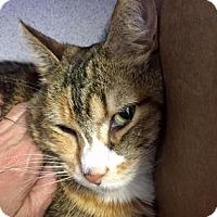Adopt A Pet :: Morgan - Fort Collins, CO