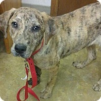 Adopt A Pet :: Buddy - Manchester, CT