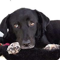 Adopt A Pet :: Buttons - Sudbury, MA