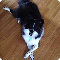 Adopt A Pet :: Aisia - Dalton, GA