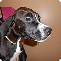 Adopt A Pet :: Gideon - Appleton, WI