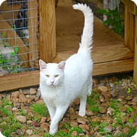Adopt A Pet :: Radcliffe - San Antonio, TX