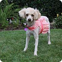 Adopt A Pet :: ISADORA - Newport Beach, CA