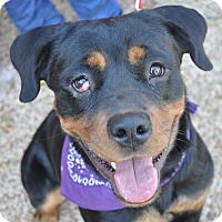 Adopt A Pet :: Raisin - Atlanta, GA