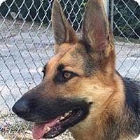 German Shepherd Dog Dog for adoption in Kansas City, Missouri - Ember