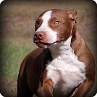 Adopt A Pet :: Walnut - Glastonbury, CT