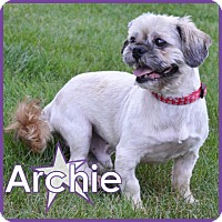 Adopt A Pet :: Archie - Excelsior, MN