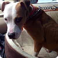 Adopt A Pet :: Greta - valley center, CA
