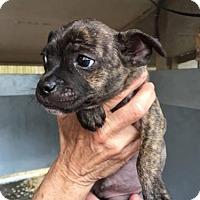 Adopt A Pet :: Warden - Freeport, FL