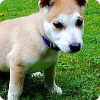 Adopt A Pet :: Mila - Surrey, BC