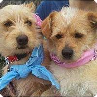 Adopt A Pet :: JILL - Houston, TX