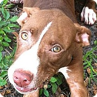 Adopt A Pet :: Shelby - Dundee, FL