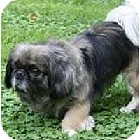 Adopt A Pet :: Dinah - Chantilly, VA
