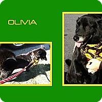 Adopt A Pet :: OLIVIA - Dallas, NC