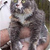 Adopt A Pet :: Leann - Summerville, SC