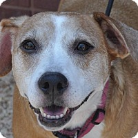 Beagle Dog Rescue Group In Ct
