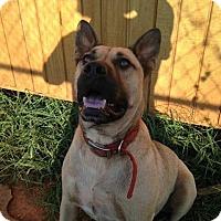Adopt A Pet :: Paul - Albemarle, NC