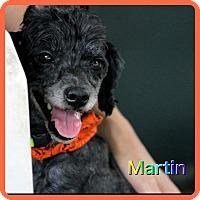 Adopt A Pet :: Martin - Hollywood, FL