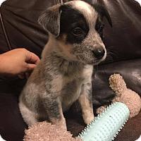 Adopt A Pet :: Tanner - Ogden, UT