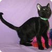 Adopt A Pet :: Herbie - Powell, OH