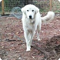 Adopt A Pet :: Buddy Boy - Kyle, TX