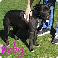 Adopt A Pet :: Koby - Scottsdale, AZ