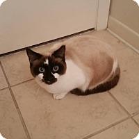 Adopt A Pet :: Maya - Gainesville, FL