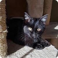 Adopt A Pet :: Hiro - Berkeley Hts, NJ