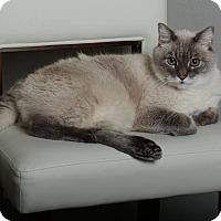 Adopt A Pet :: JJ and Zoe - Orange, CA