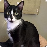 Adopt A Pet :: Lizzy - Arlington/Ft Worth, TX