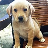 Adopt A Pet :: Puddy - BIRMINGHAM, AL