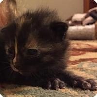 Adopt A Pet :: Lotus - Herndon, VA