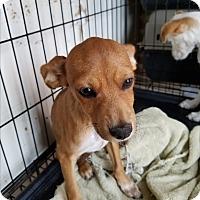 Adopt A Pet :: ABBETT - TAHOKA, TX