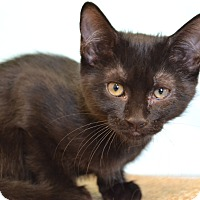 Adopt A Pet :: Pearl - Larned, KS