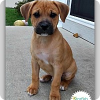 Adopt A Pet :: Kenny - Plainfield, IL